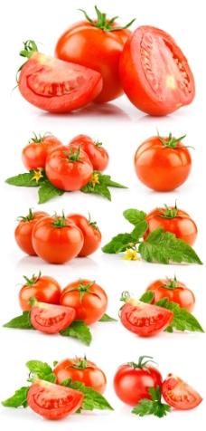 多组高清西红柿图片