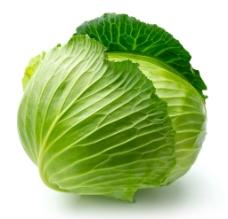 卷心菜图片