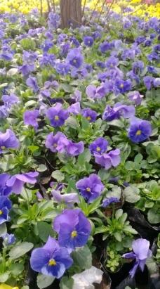 春天 花丛图片