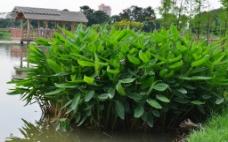 东莞生态园图片