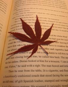 红叶书签图片