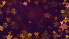 花卉动画素材