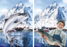 挪威三文鱼图片
