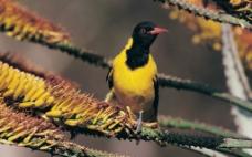 小鸟 鸟类图片