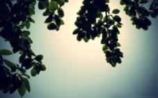 树叶治愈系