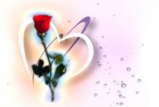 红玫瑰视频素材