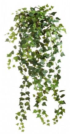 绿叶藤蔓元素图片