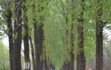 青翠树林高清图图片
