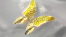 蝴蝶视频素材