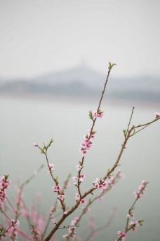 特别有意境的桃花图片