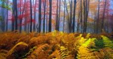 丛林 树林图片