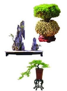 植物盆景图片