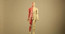 中医人体穴位模型  实拍