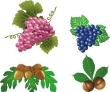 矢量 绿葡萄图片