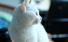 凝视的猫咪侧面图片