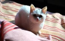 看着镜头的猫图片