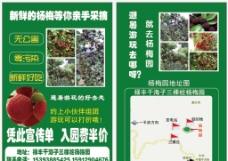 杨梅采摘园宣传单图片