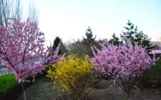 春花开了图片