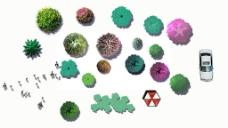 彩平整理素材树例图片