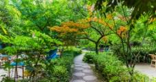 望江公园图片