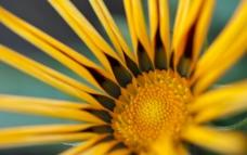 花草 植物 微距图片