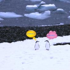创意企鹅对话设计