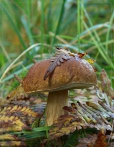 野生蘑菇图片