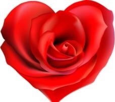 心形玫瑰图片