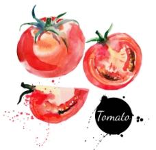 水彩蔬菜西红柿图片