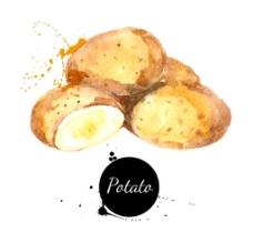 水彩蔬菜土豆图片