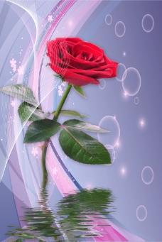 玫瑰水纹倒影背景墙