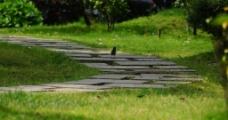 林荫小道上的山雀图片