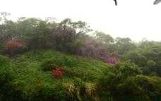 山坡绿化图片