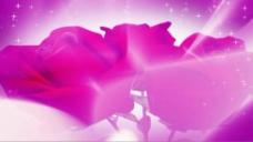 紫玫瑰视频素材
