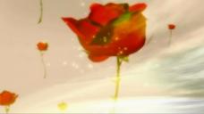 飘动的玫瑰视频素材