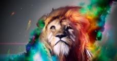 绚丽 狮子 美图图片
