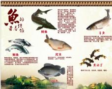 鱼的营养价值图片