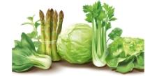 新鲜蔬菜矢量素材图片