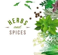 新鲜香草与香料设计图片