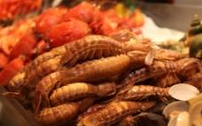 濑尿虾图片
