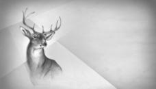 手绘鹿背景图图片