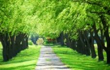 树林风景背景图片