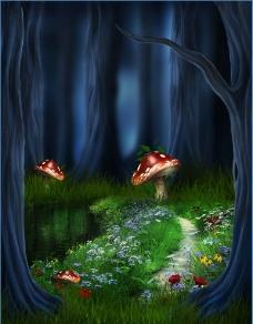 夜间树丛蘑菇美景图片