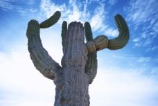 沙漠风情图片