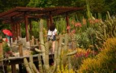 沙漠植物图片