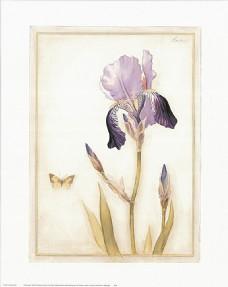 紫罗兰与蝴蝶装饰画