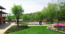 英歌石植物园图片