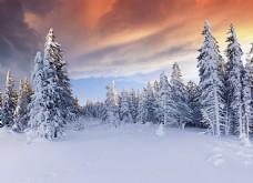 美丽树林雪景背景