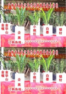 兰花种植 欧阳红梅