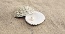 贝壳里的珍珠图片